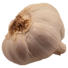 garlic 100x100